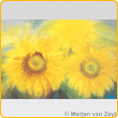 Postcards M. v. Zeyl - Sunflowers