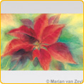 Postcards M. v. Zeyl - Christmas Flower