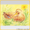 Postcards M. v. Zeyl - Duck and Frog