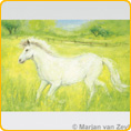 Postcards M. v. Zeyl - Little White Horse