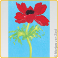 Postcards M. v. Zeyl - Red Anemone