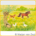 Postcards M.v.Zeyl - Frisky foal in the meadow - 10 pcs